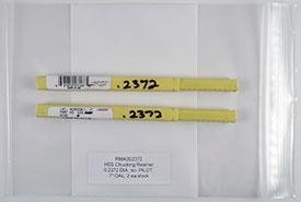 Chucking Reamer, .2420 Diameter, Non-Piloted, HSS, 6'' OAL, RMA0S2372